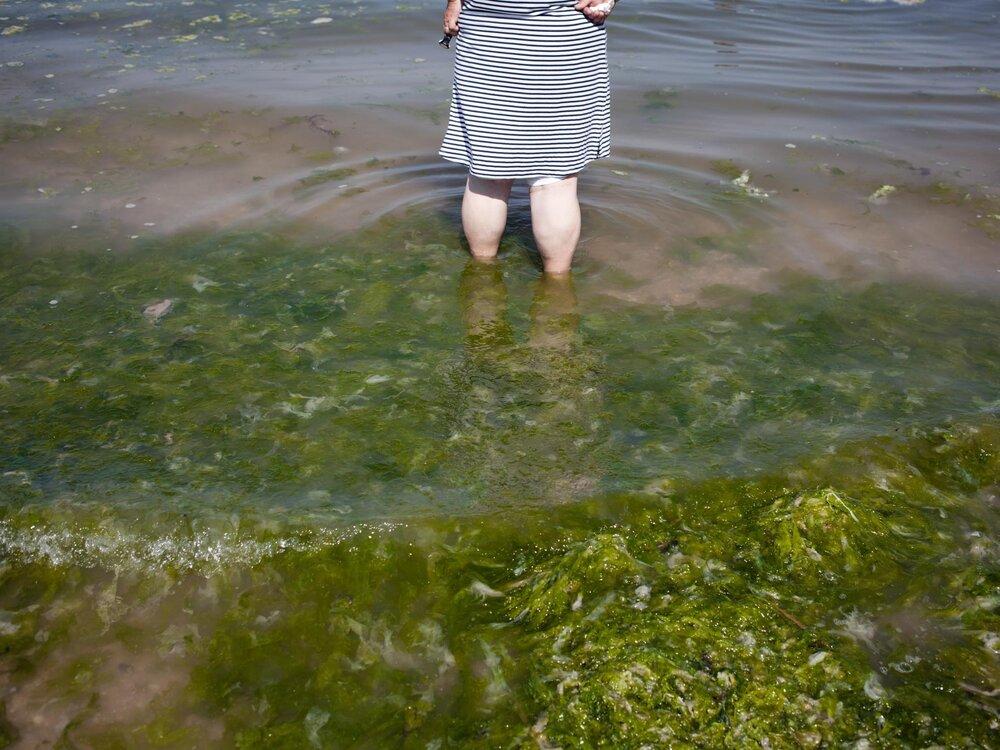 Saint Brieuc. 21 juin 2017.  Une femme se baigne sur plage de Cession à Saint Brieuc, au milieu des algues vertes  Avec les chaleurs estivales annoncées, les militants écologiques craignent un été favorable au raz de marée des algues vertes dans la baie de Saint Brieuc.