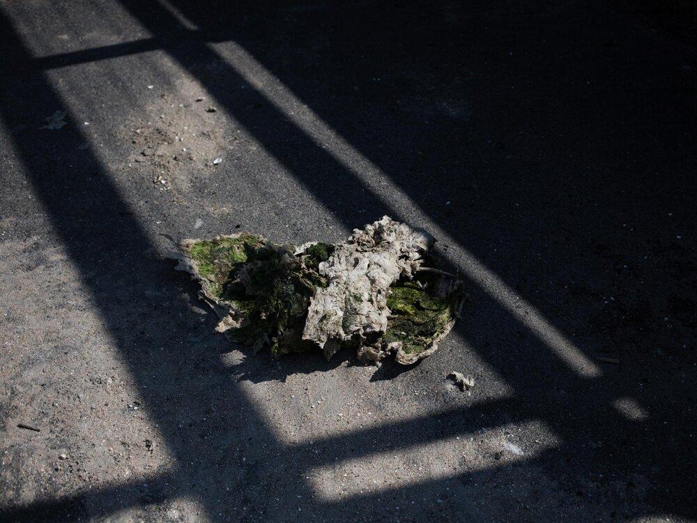 Amas d'algues vertes séchées en décomposition sur la plage de Cesson à Saint Brieuc