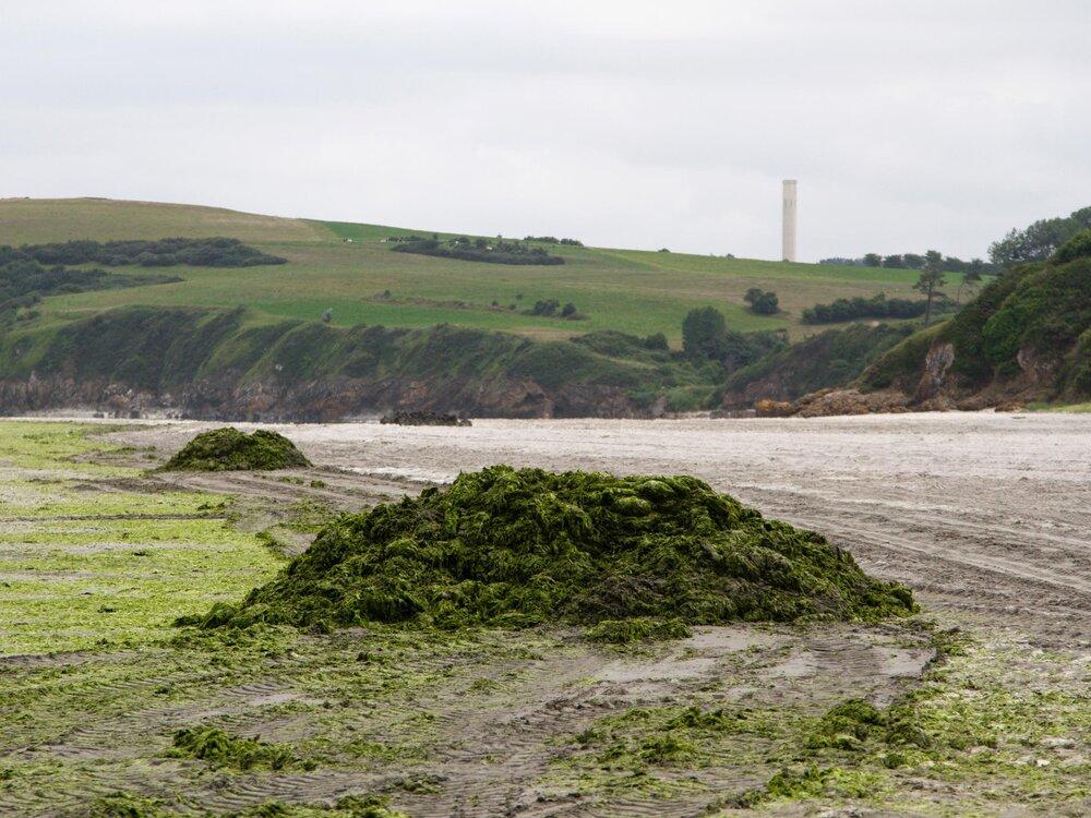 Hillion. Plage de Bon Abris. 22 juin 2017.  Un tas d'algues fraichement déposé par l'entreprise chargée du ramassage d'algues vertes est en train de sécher pour être ensuite amené à la déchèterie de Launay-Lantic, au nord de Saint-Brieuc.