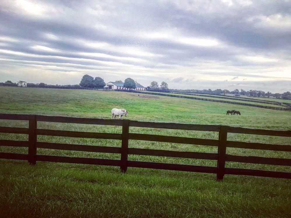 Horses snacking in rolling green Kentucky.