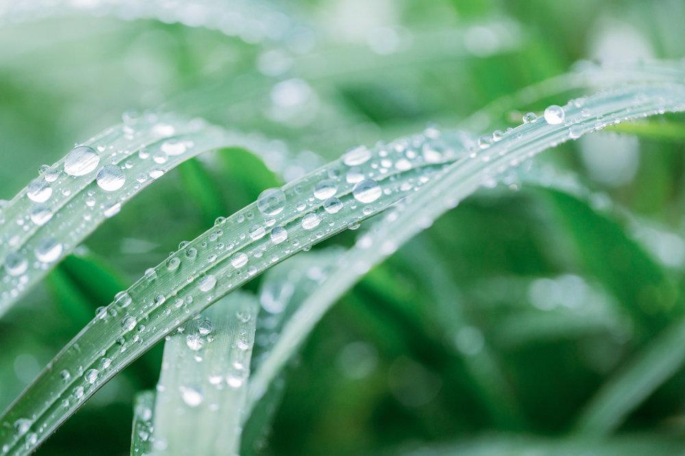 yosemite-grass-raindrops.jpg