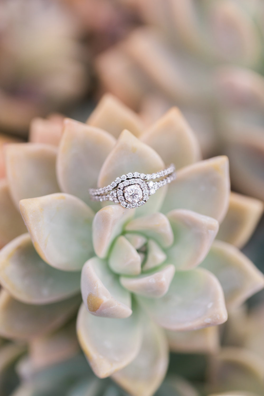 succulent-ring-shot.jpg