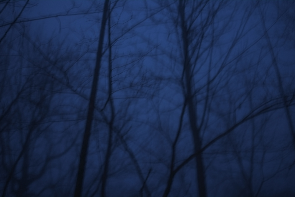 Monteagle, TN          January 26, 2016  Fog BY CARL SANDBURG  The fog comes on little cat feet.  It sits looking over harbor and city on silent haunches and then moves on.