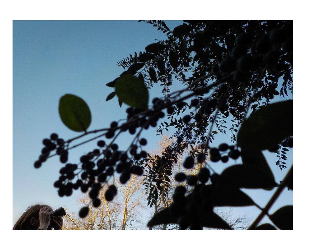 photographsbythechildrenofstoryplace2016-24.jpg
