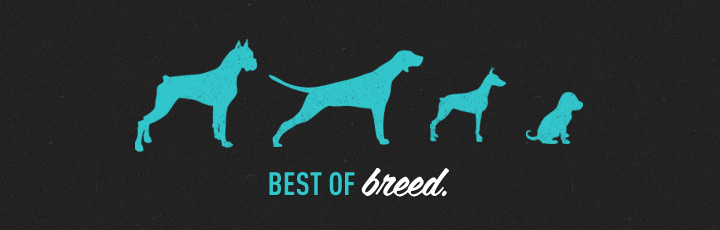 vancouver-branding-package-design-web-design-straydog.jpg