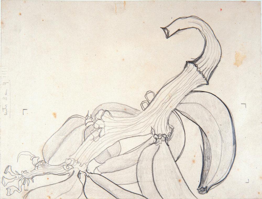 1968.22 - Esboço bananas.jpg