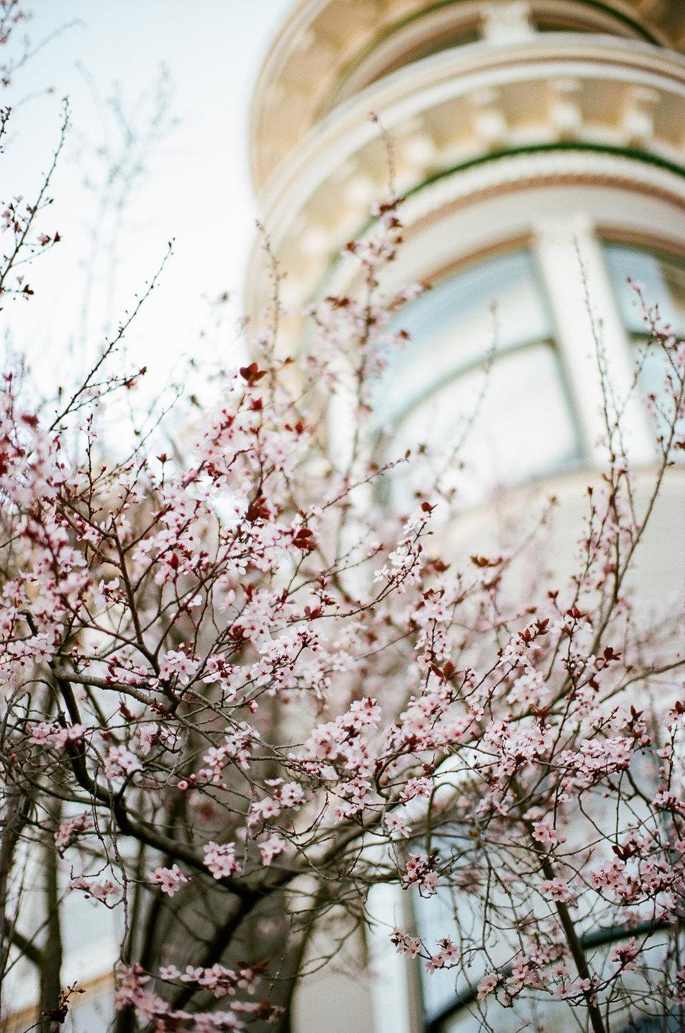 encourage_spring_128.jpg