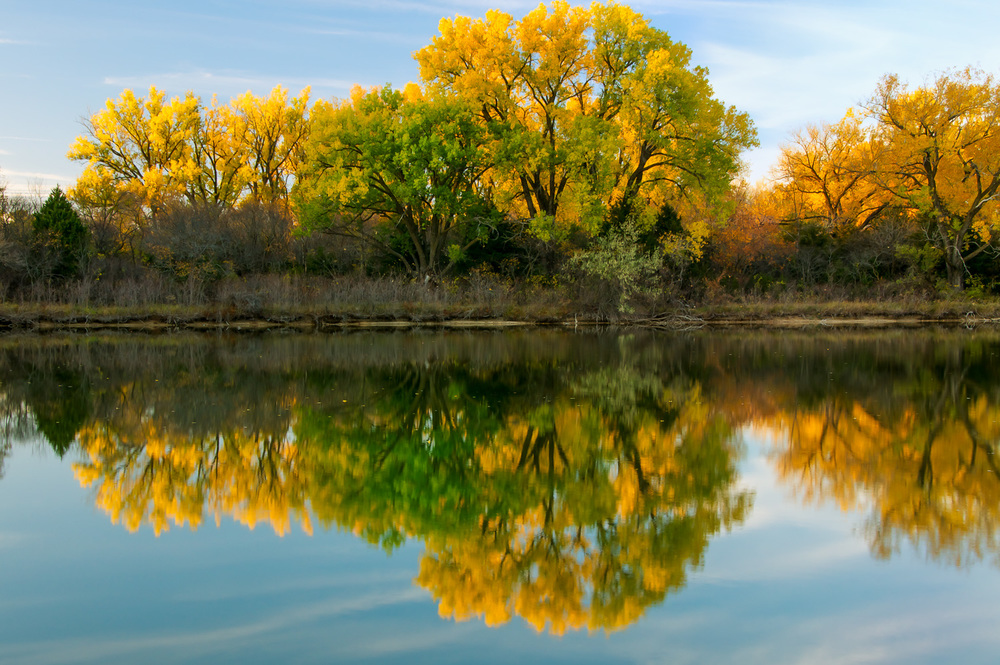 Fall Cottonwoods Reflecting on Lake
