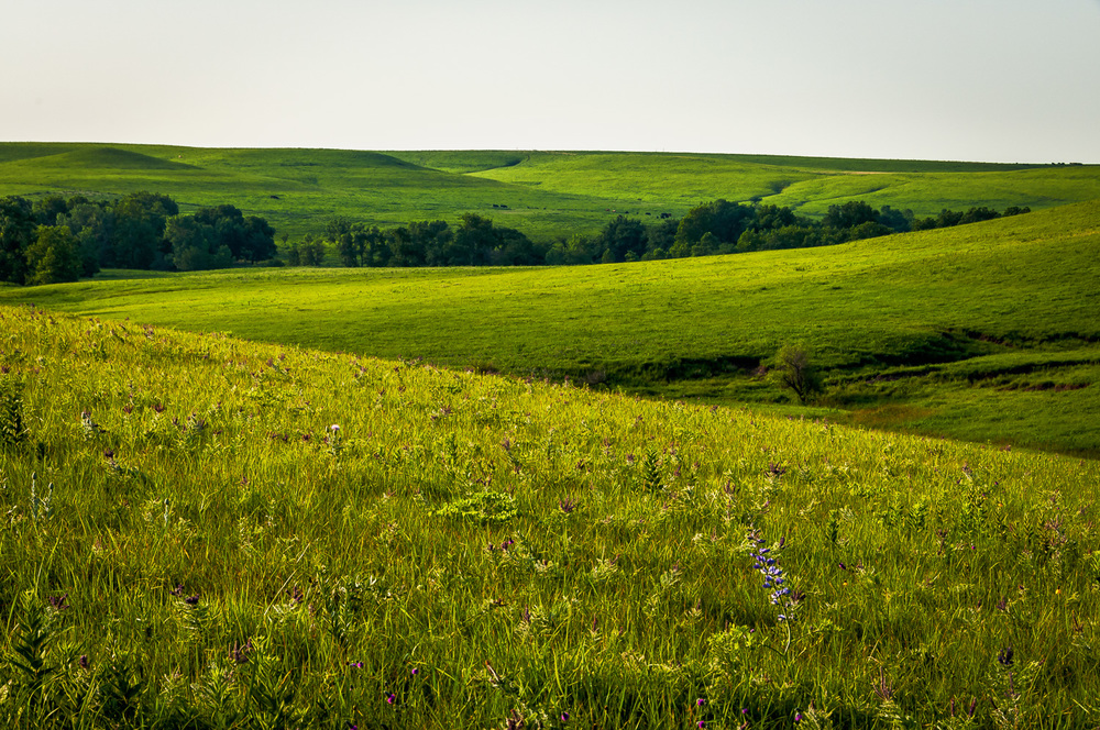 Flint Hills Tallgrass Praire in the Summer