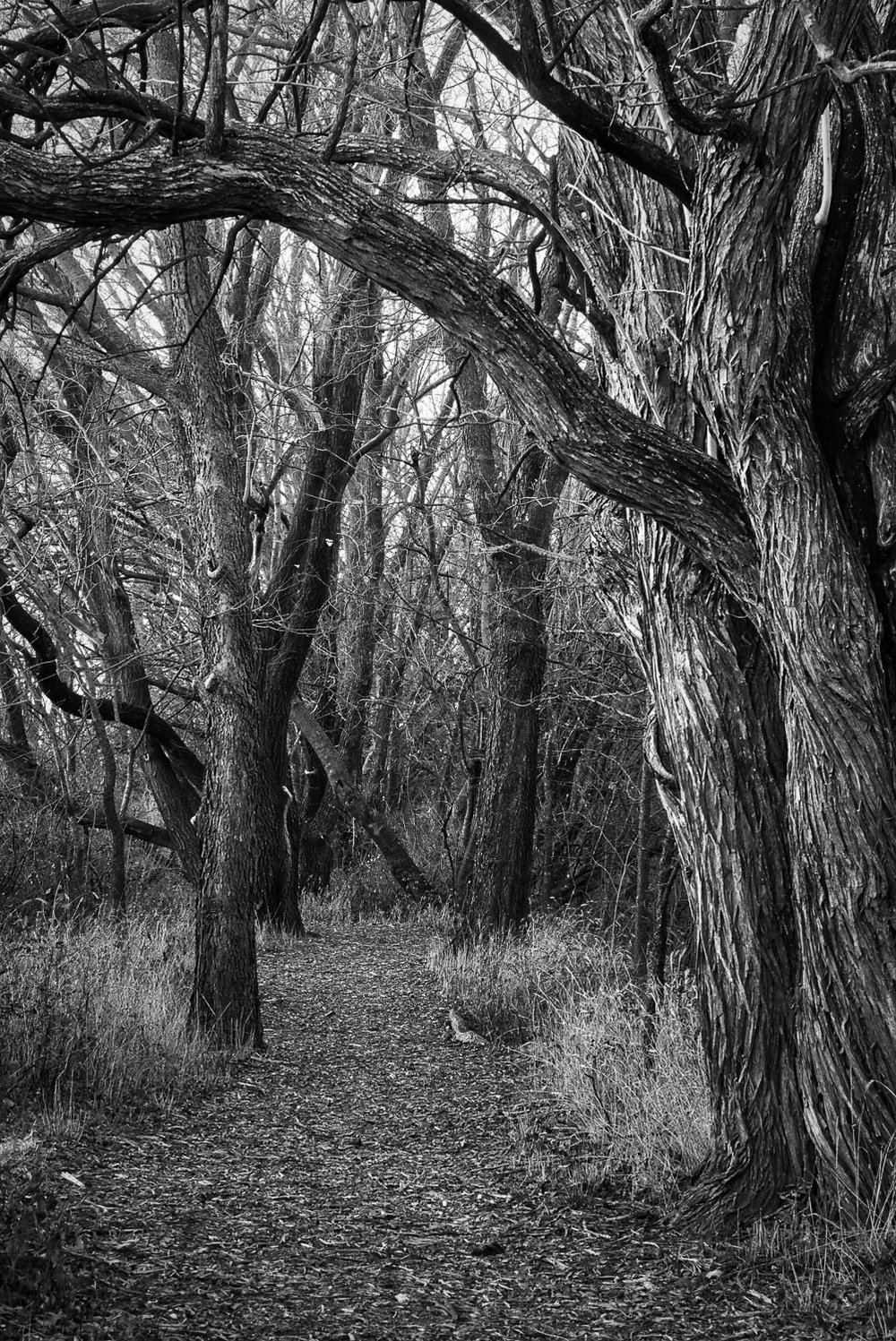 Wooded Trail in Black & White