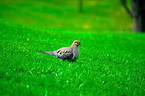 bird on grass