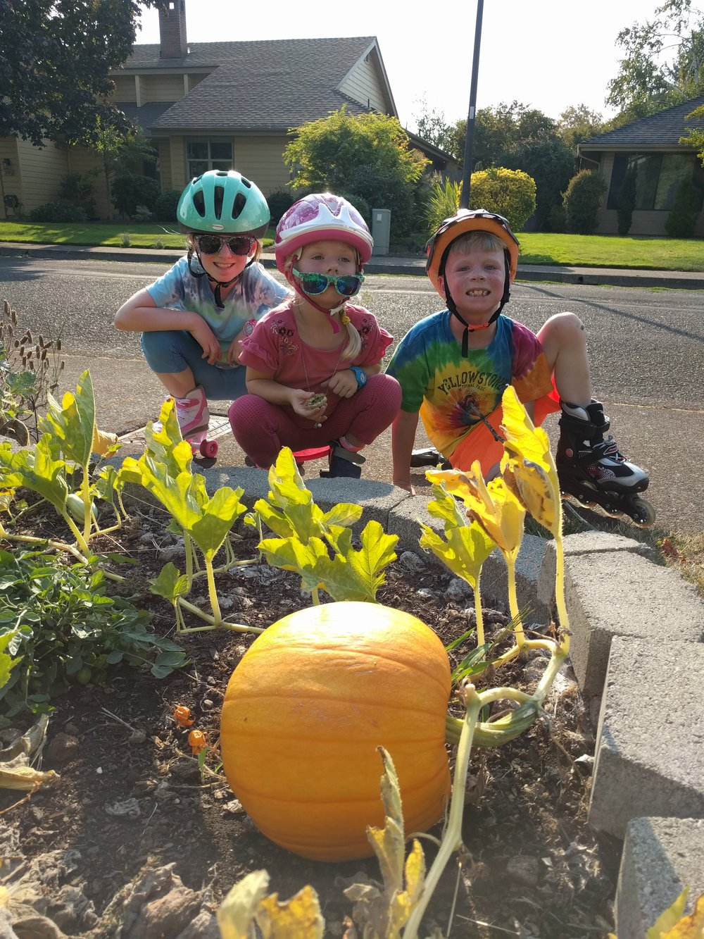 The handful of seeds that were planted resulted in 15 pumpkins! The kids were very excited at the bountiful harvest and each chose the pumpkin they want to keep to carve before Halloween.