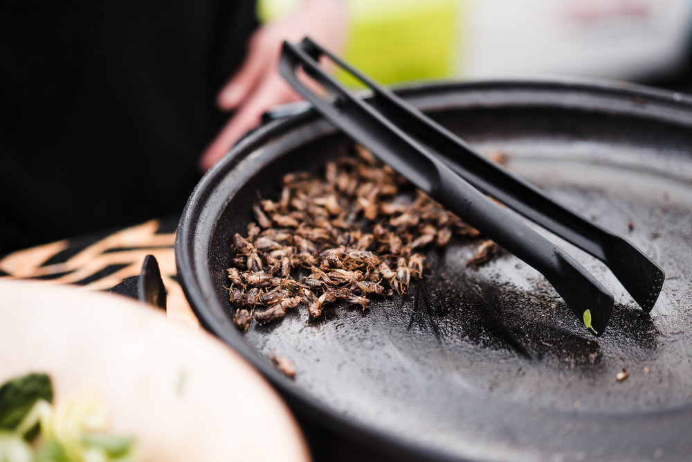 fried-insects-beetles-traditional-exotic-asian-food-picjumbo-com.jpg