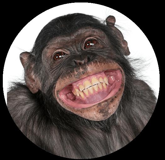 monkey (1).png
