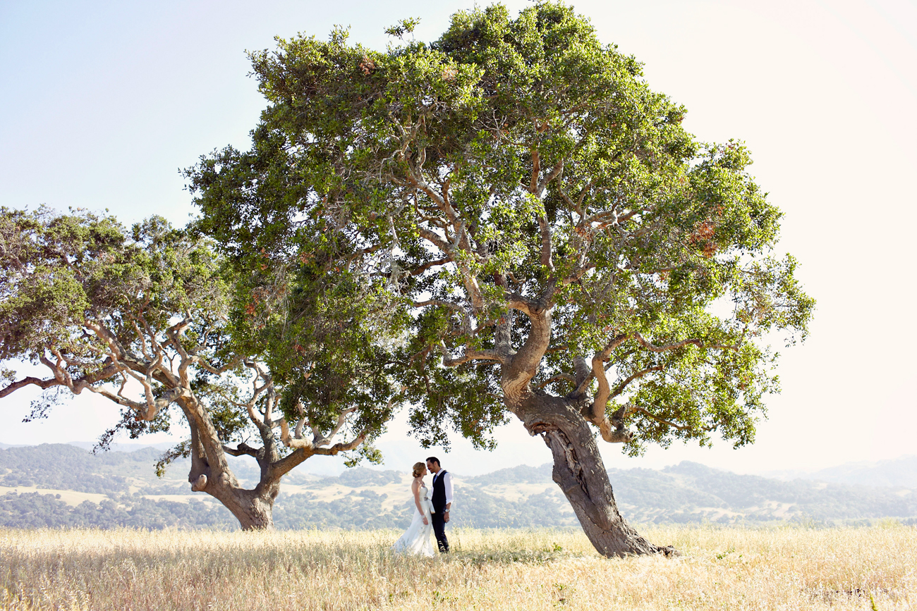 Winery big tree wedding ceremony