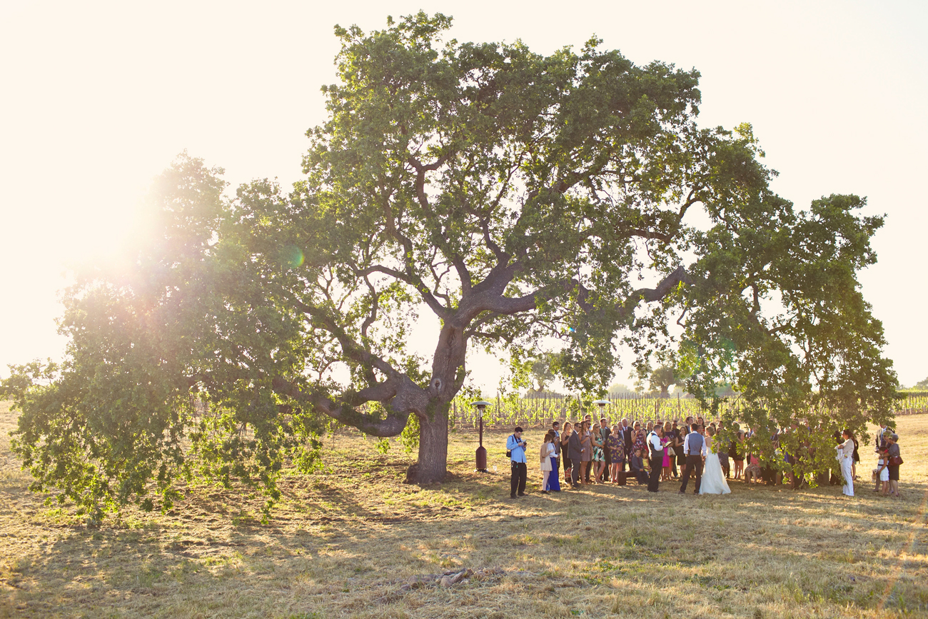 Winery wedding ceremony under tree