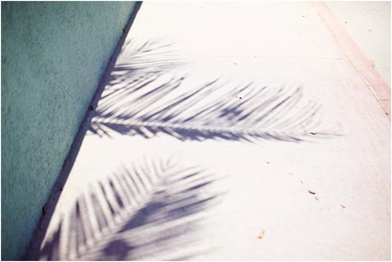 Mexico wedding, palm tree shadow