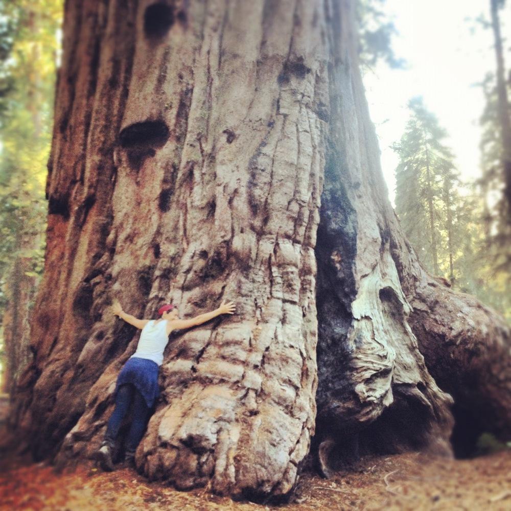 tree_hug.jpg