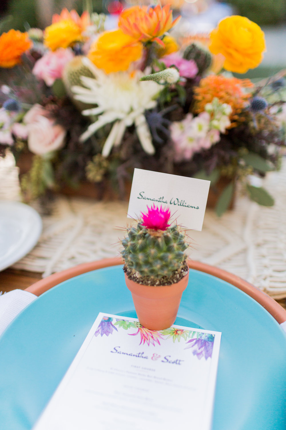 Cacti & Succulents - $5 - These sweet potted cacti and succulents come in a 2.5
