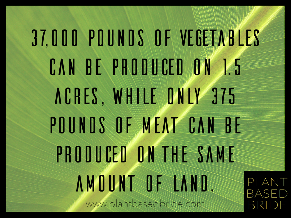 Crazy fact about how much land you need to grow vegetables vs raising livestock!  www.plantbasedbride.com