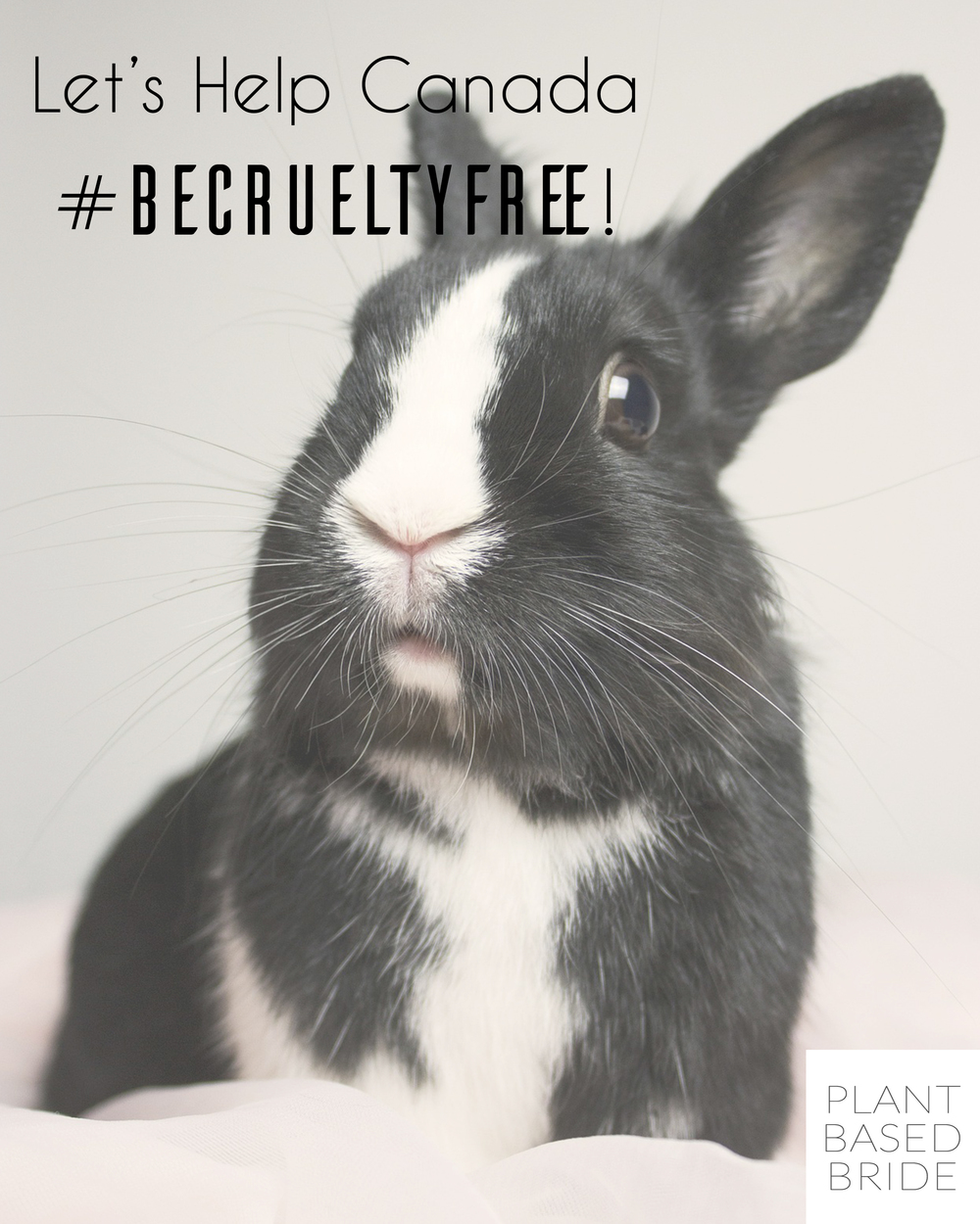 Canada is on it's way to prohibiting animal testing for cosmetics!  Let's help Canada #BeCrueltyFree by signing a petition of support and spreading the word!