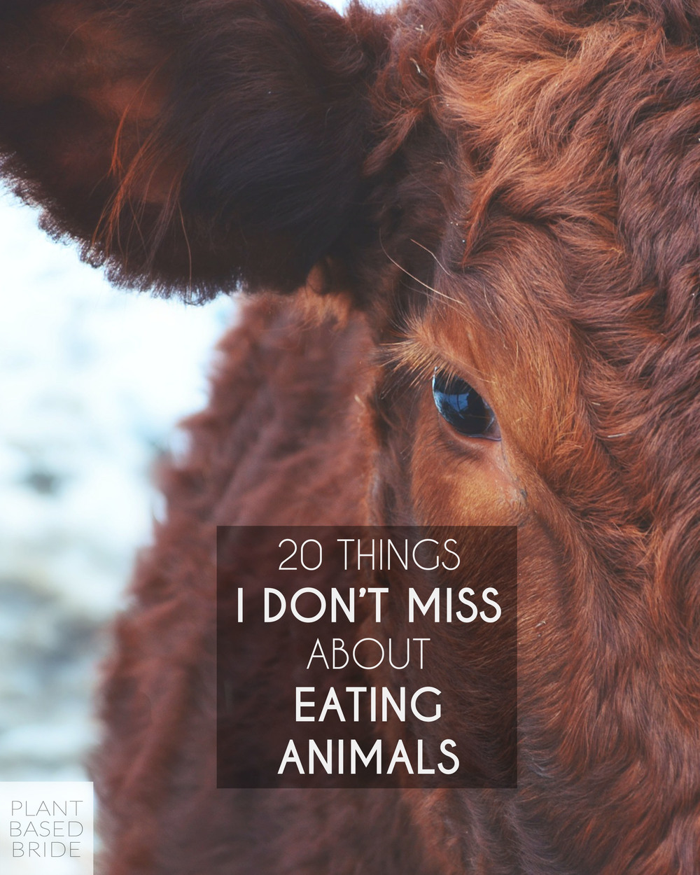 Learn 20 things I don't miss about eating animals - the confessions of a vegan of three years! // Plant Based Bride