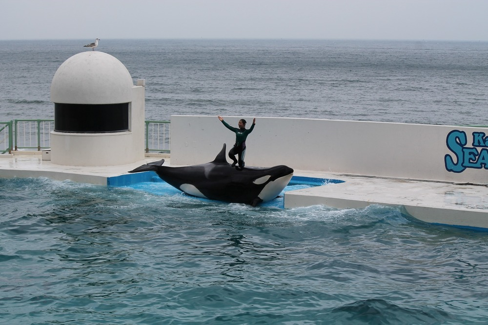 SeaWorld moves towards a more humane business practice.  But is it enough? // Plant Based Bride