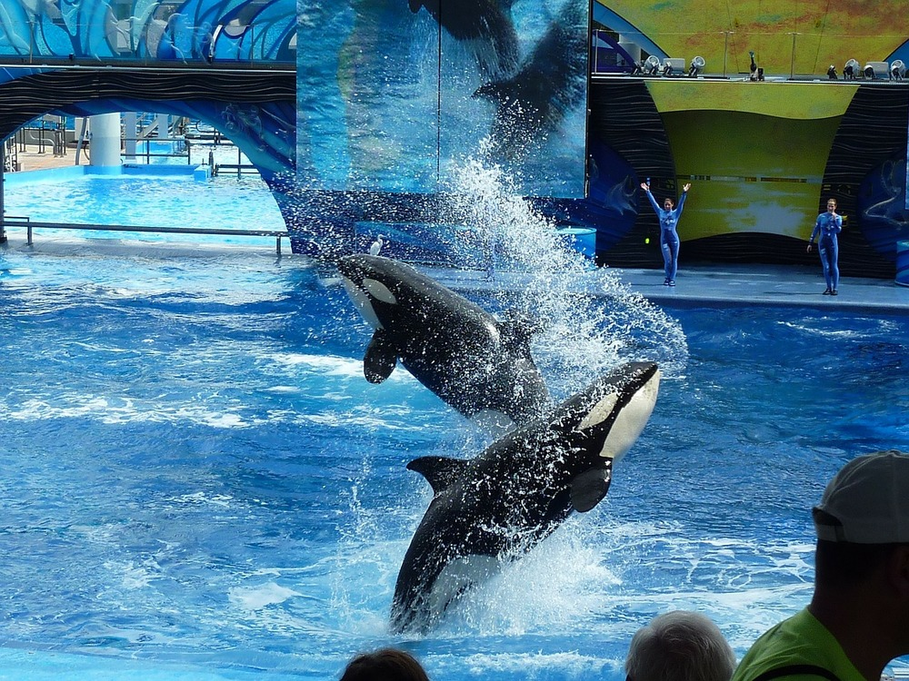 SeaWorld Announces the End of Theatrical Orca Shows // Plant Based Bride