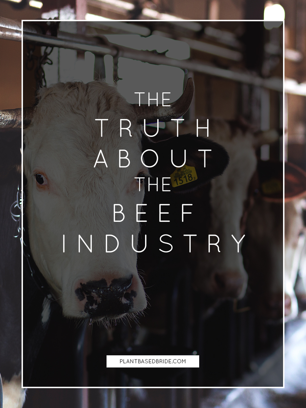 The Truth About The Beef Industry // Plant Based Bride