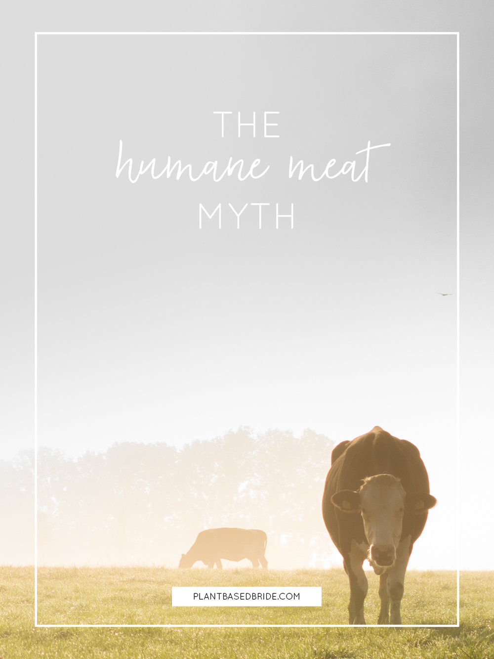 The Humane Meat Myth // Plant Based Bride