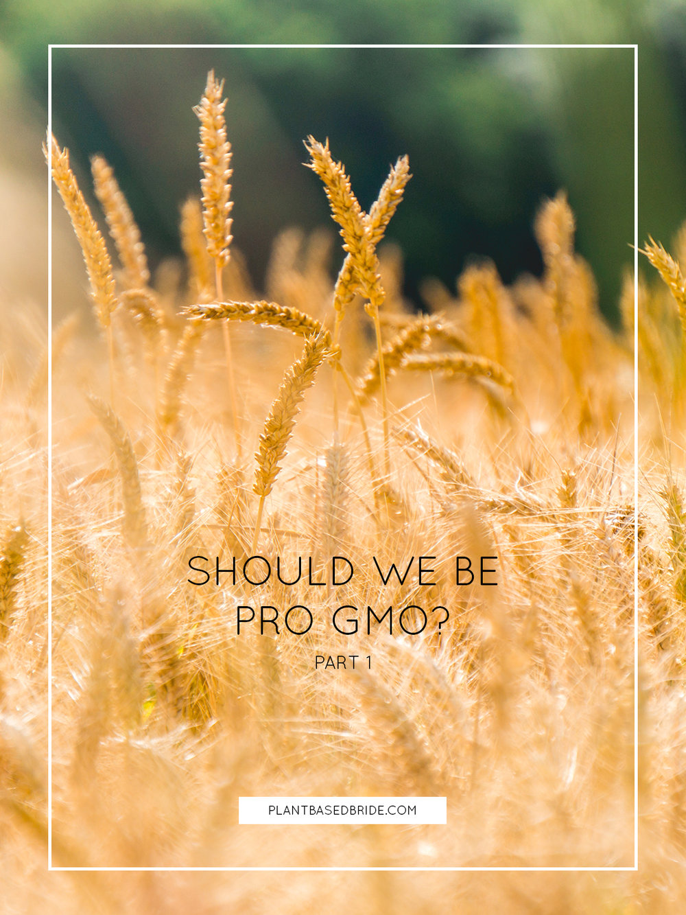 Should We Be Pro GMO? // Plant Based Bride