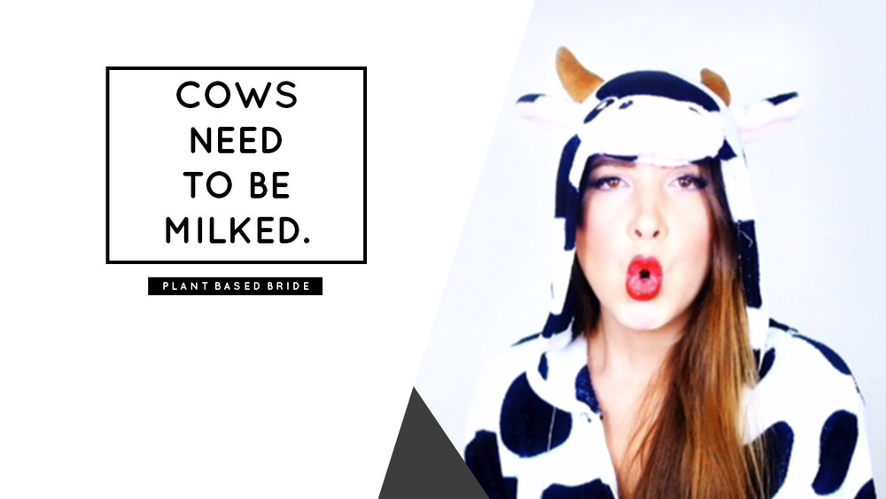 "Vegan Myth Buster: ""Cows Need To Be Milked."" // Plant Based Bride"