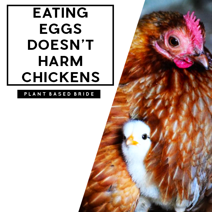 Eating Eggs Doesn't Harm Chickens #VeganMythBuster