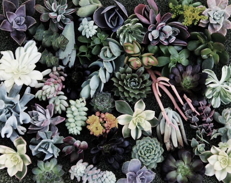 Succulent Wallpaper Tumblr 79213
