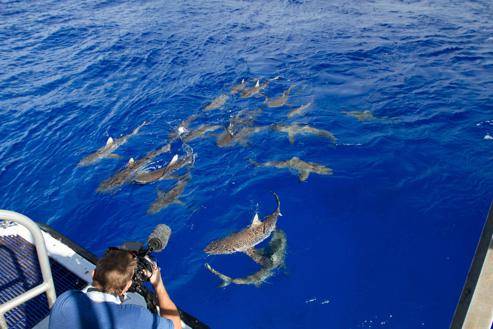 Filming Reef Sharks off of Rongelap Atoll