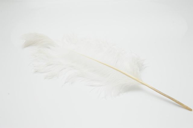 White Ostrich Feather - 50 cents each