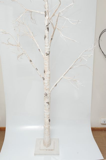 Tree White Birch - Hire for $30
