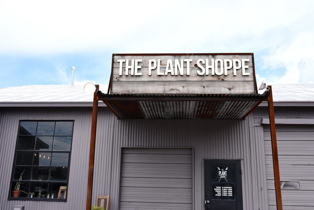 ThePlantShoppeFamblog-011.jpg