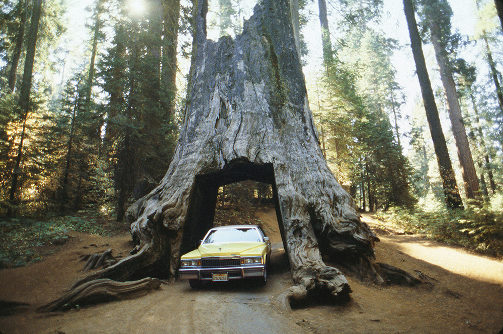 Dad's yellow Cadillac, near Yosemite, CA. October 1988.jpg