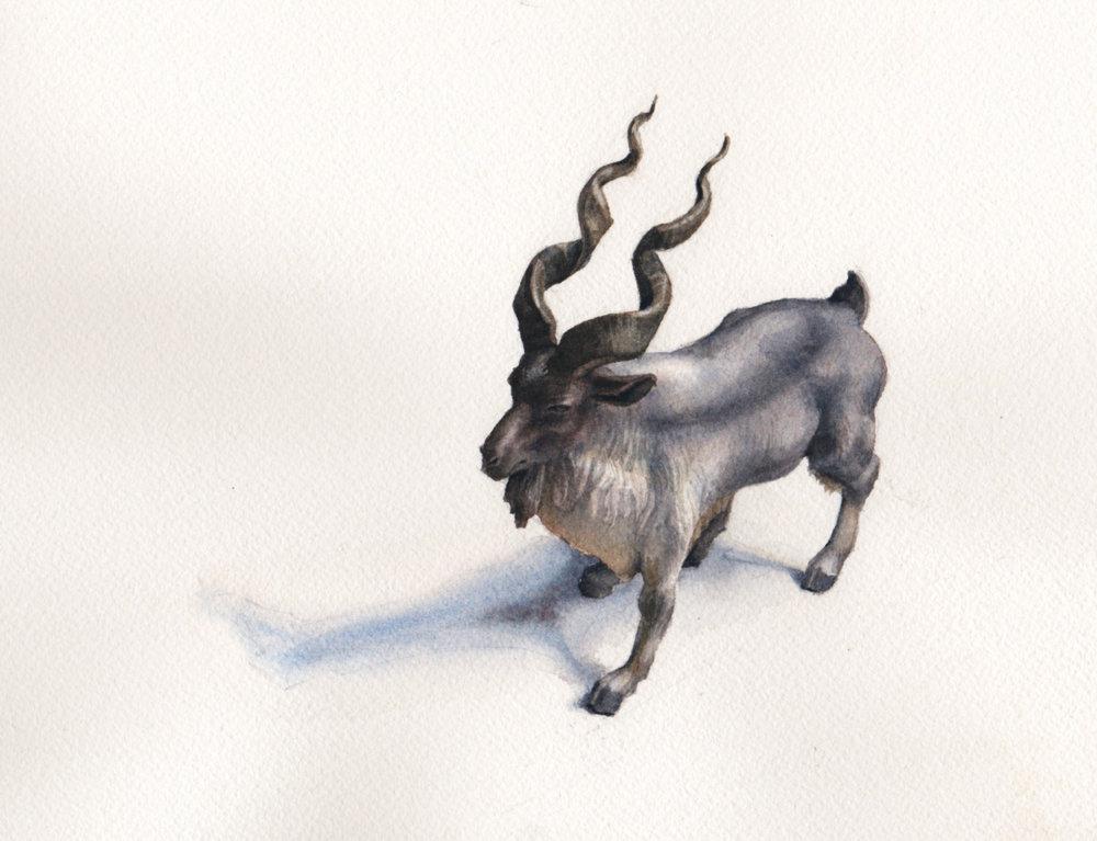 Goat study