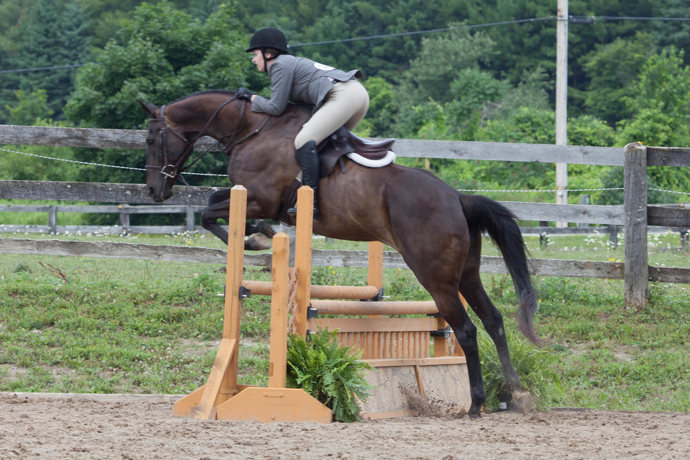 vsco edit horse show-4.jpg