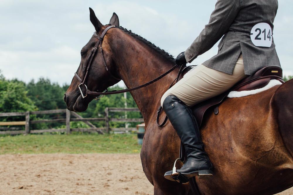 vsco edit horse show-8.jpg