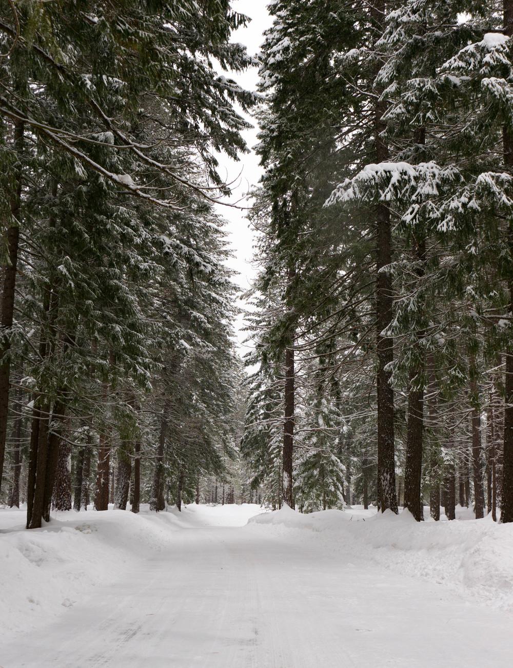 snow-39.jpg