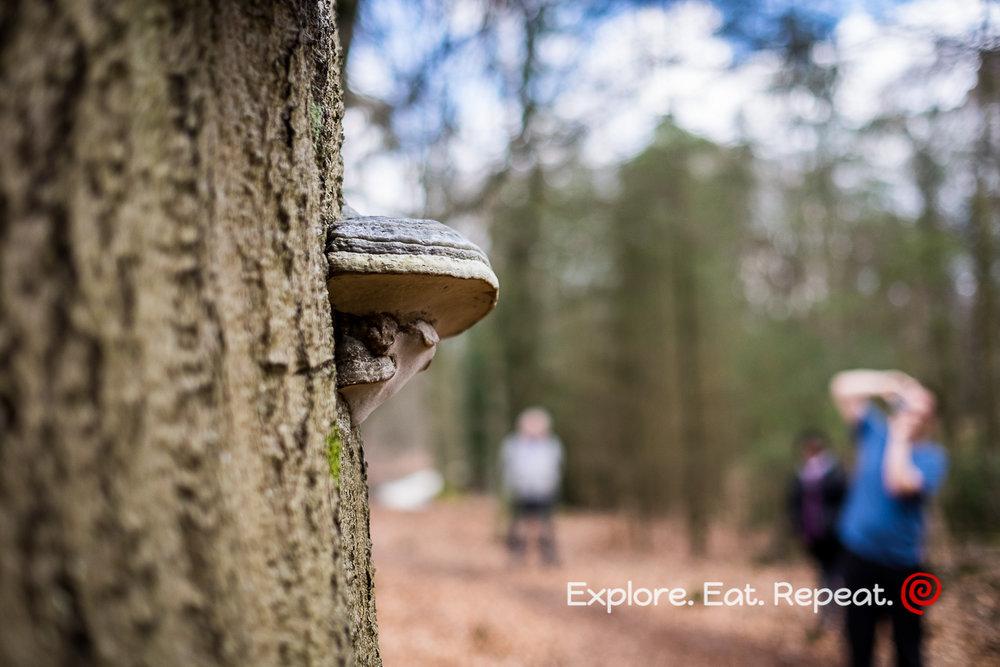 woods-3269.jpg