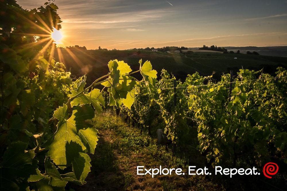 vinyard-0777.jpg