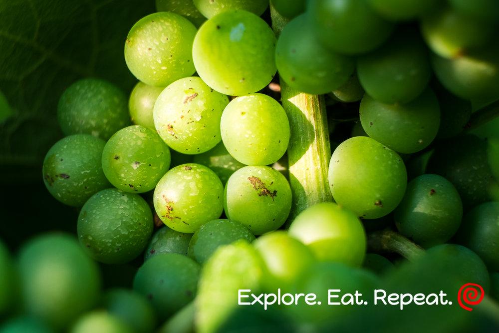 vinyard-0785.jpg