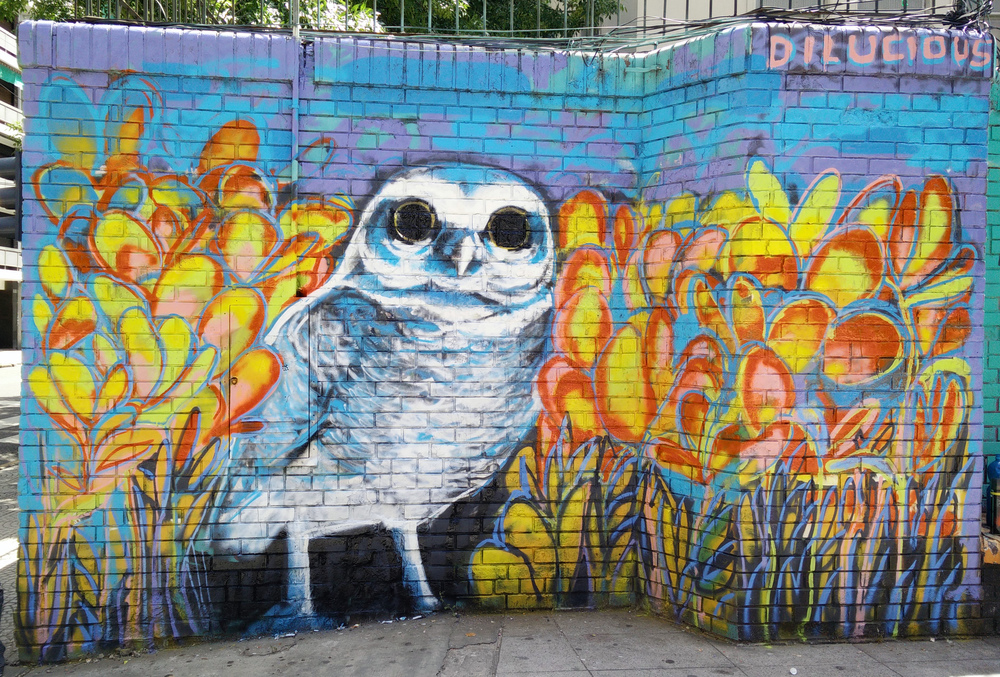 Graffiti - Owl by Dilucious
