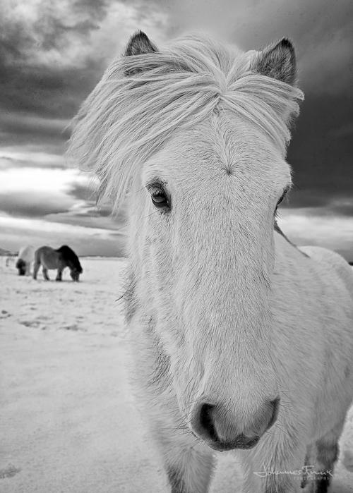 johannes_horse_3.jpg