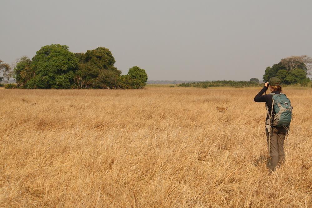 Kasanka National Park, Zambia