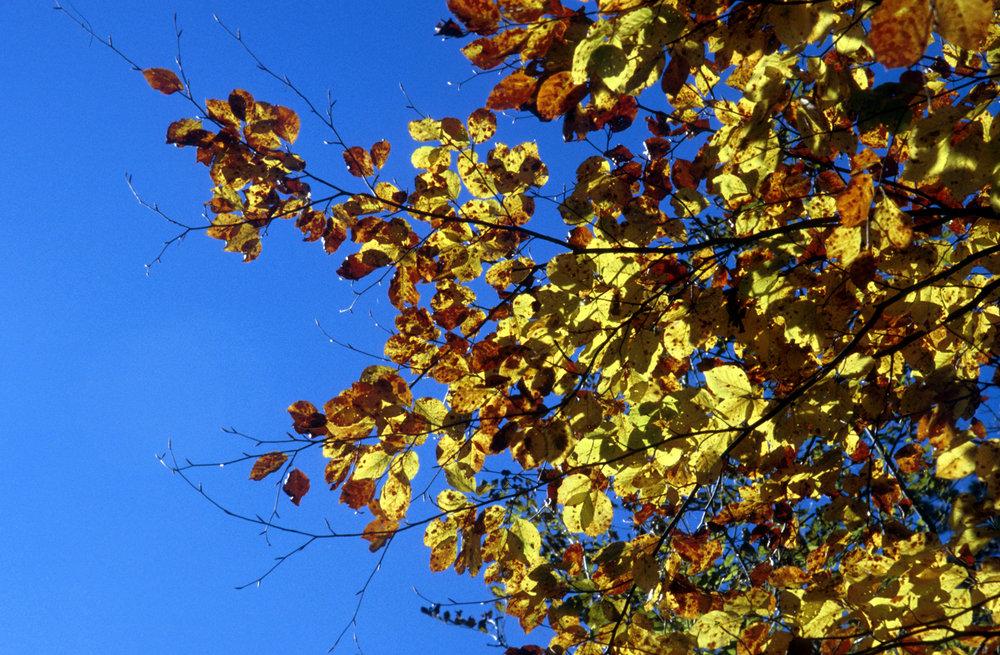 leaves-7v3p.jpg